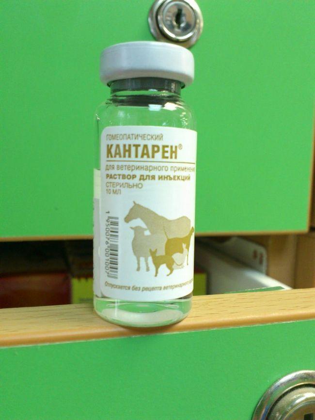 Kantar се използва както за профилактика и лечение