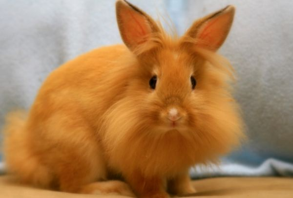 Hrošík králik - zvieracia duša