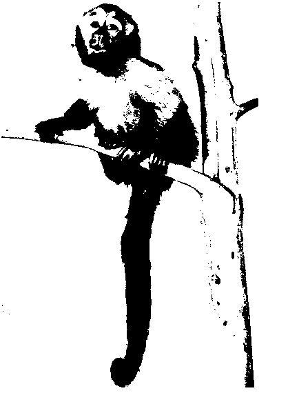 Fotografie recensământul populației 3 maimuță