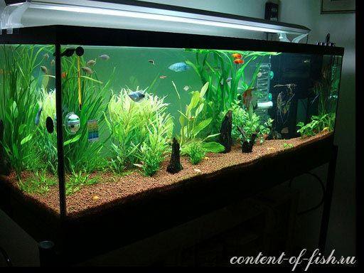 Kiselost vode u akvariju, ili metričke ph
