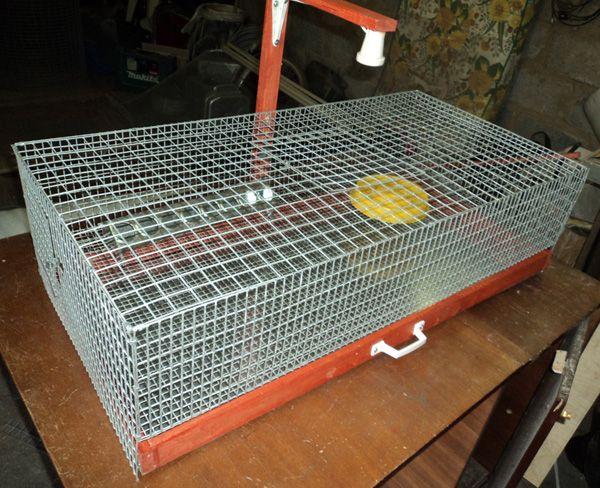 Design mic pentru puii din grila