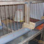 Cage pentru pui cu consumatorii de alcool și alimentatoare