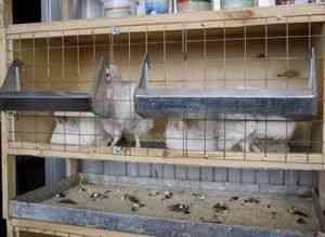 schema de fabricare de celule pentru puii de carne cu mâinile lor