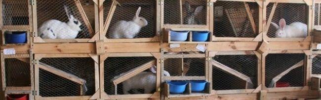 Colivii pentru iepuri cu propriile lor mâini - un design simplu și sofisticat