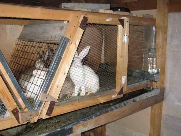 Pe celulele foto la iepuri