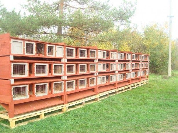 celule foto pentru iepuri