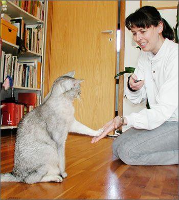 Clicker tréning pre mačky