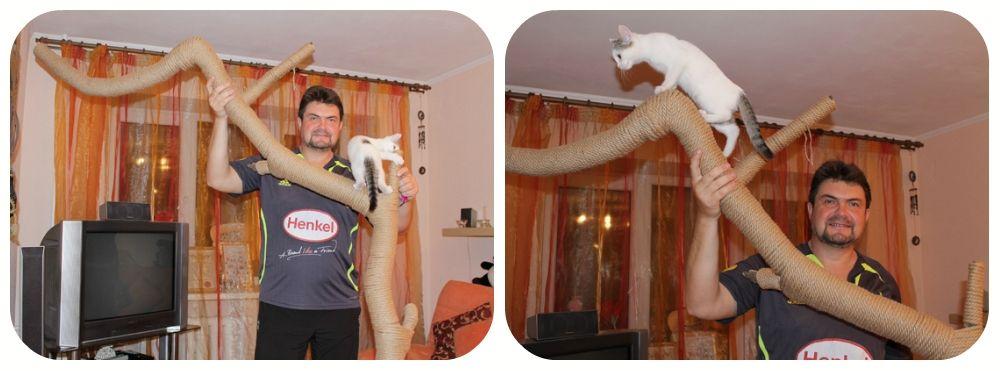 Škrabanie miest pre mačky s vlastnými rukami