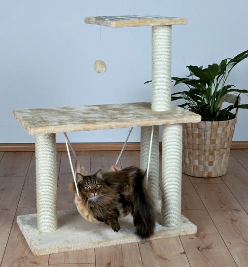 complex de joc cu pisici