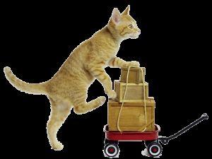 Команди за котки