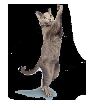 Tím Cat: