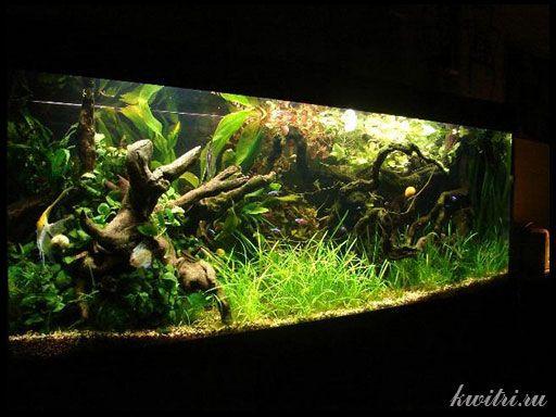 Driftwood za akvarij