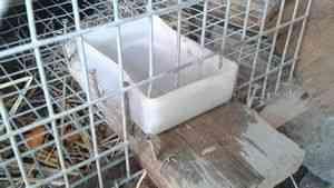 Iepuri de reproducție: cum să facă cuști pentru iepuri cu mâinile? Troacă ...