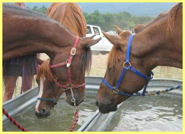 Hranjenje i održavanje radnih konja i briga za njih