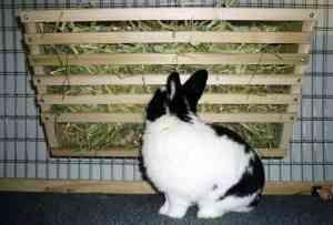 Ako vyrobiť žliabok pre králiky s rukami