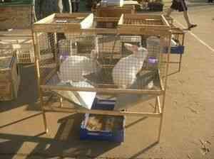 Troaca pentru iepuri - Forum