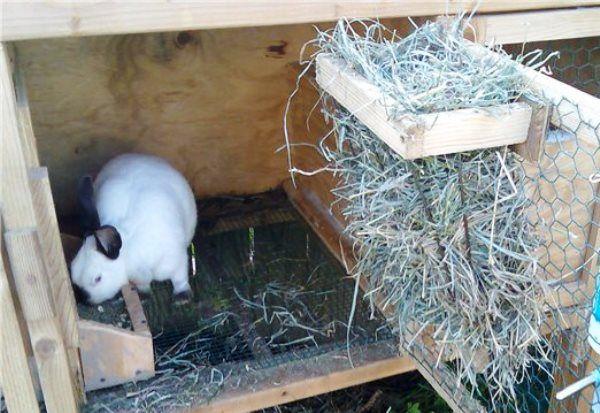Typy kŕmnych žľabov pre králiky