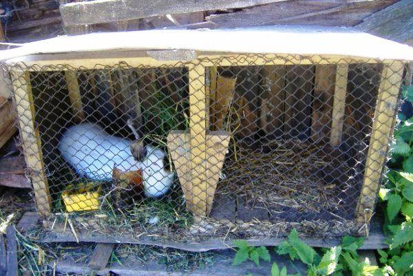 Senik tráva králiky