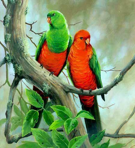 Mužský a ženský kráľovský Papagáj - vzhľad