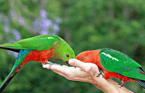 Samce a samice krmivo na ľudskej ruky