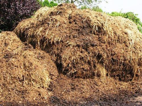 Najlepšie hnojivo hnoj