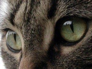 Очите на котката