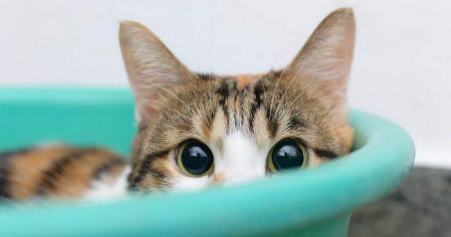 Značená bytu na nesprávnom mieste v neprítomnosti majiteľa býva nízko postavených alebo niečo trápi mačky.
