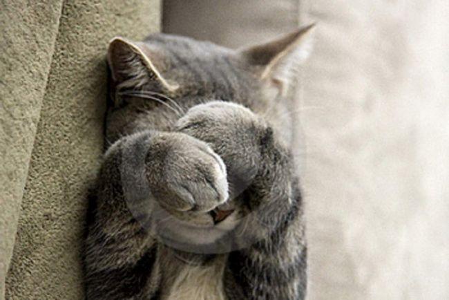 Umyť pach mačacie moču, a ešte viac tak mačka označí bežné saponáty nemožné.