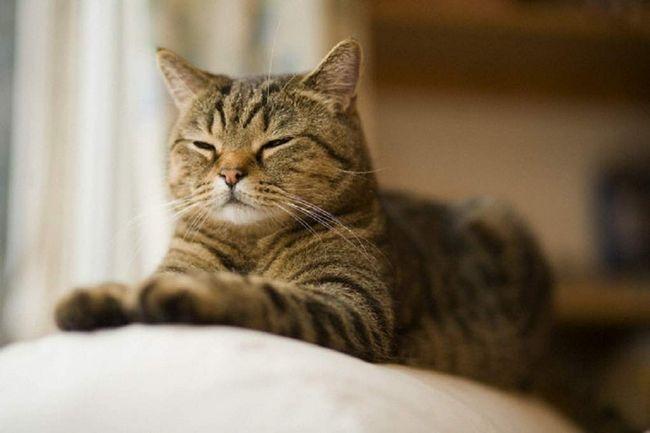 Pouličné mačky označiť ich miesto nie je na perimetra a najobľúbenejších trás.