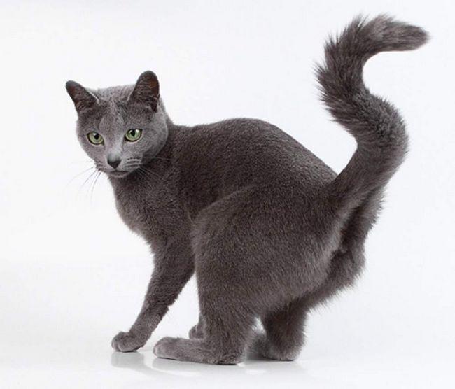 Spray - normálna prevádzka pre väčšinu mačiek.