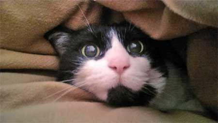 Котката се страхува от силни шумове.