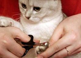 In loc de a scoate ghearele pisicii, aveți posibilitatea să le tăiați în mod regulat ...