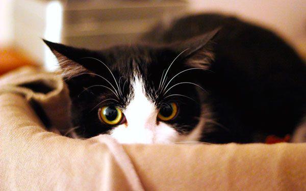 Mačka a vysávač, prečo domáce zvieratá majú strach z hlučných spotrebičov