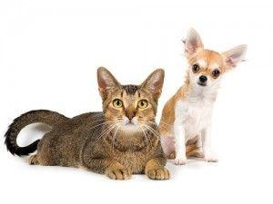 Pisică sau de câine