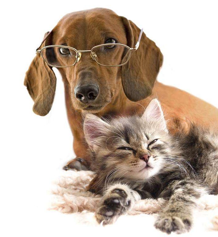 iubitorii de pisici