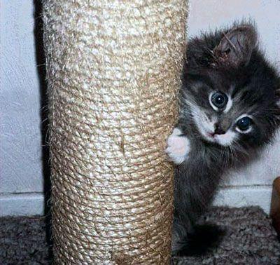 Cat ascutit ghearele