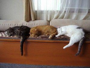 Под наем за котки