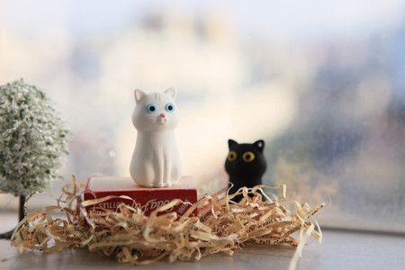 mačky blesk