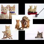 Tapetu s mačkami
