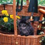 Tapety s mačkami