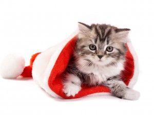 Котки и Нова година