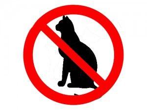 Котки и забрани