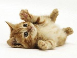Mačky - na plochu