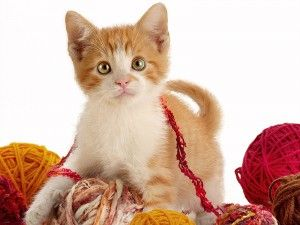 Cat. десктоп тапети