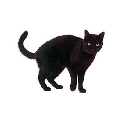 Котки пазачи