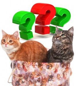Cat. Отговори на въпроси