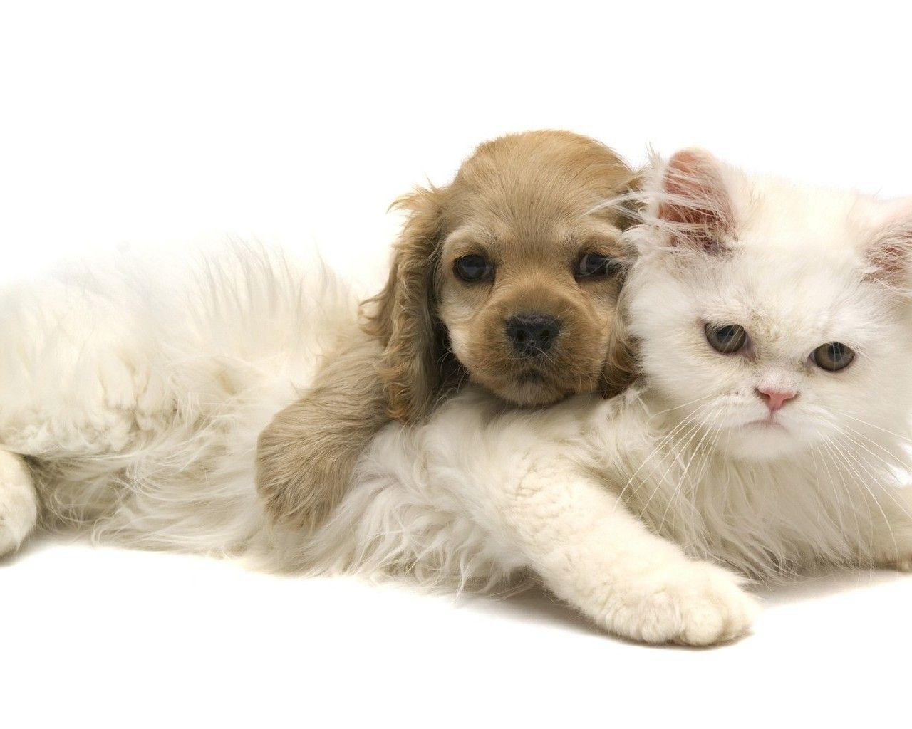 Pisici și câini
