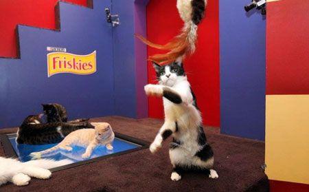 Котки Facebook