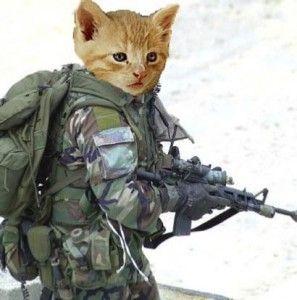 Котките през Втората световна война
