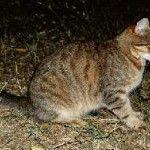 cat dudák